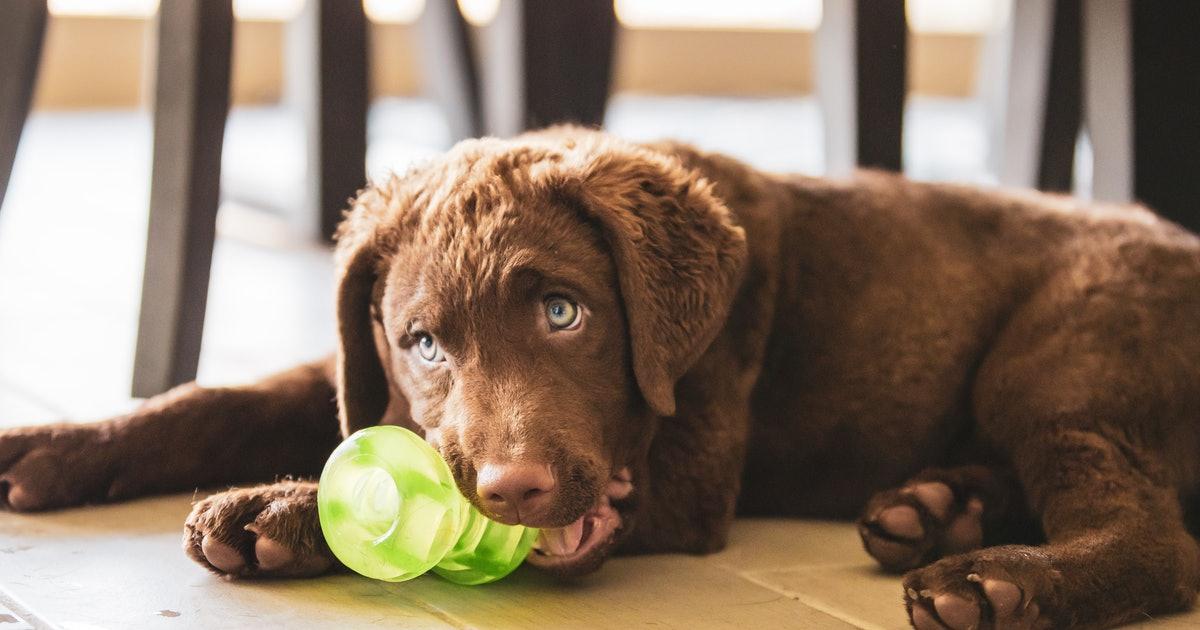 jouets a macher chien bio