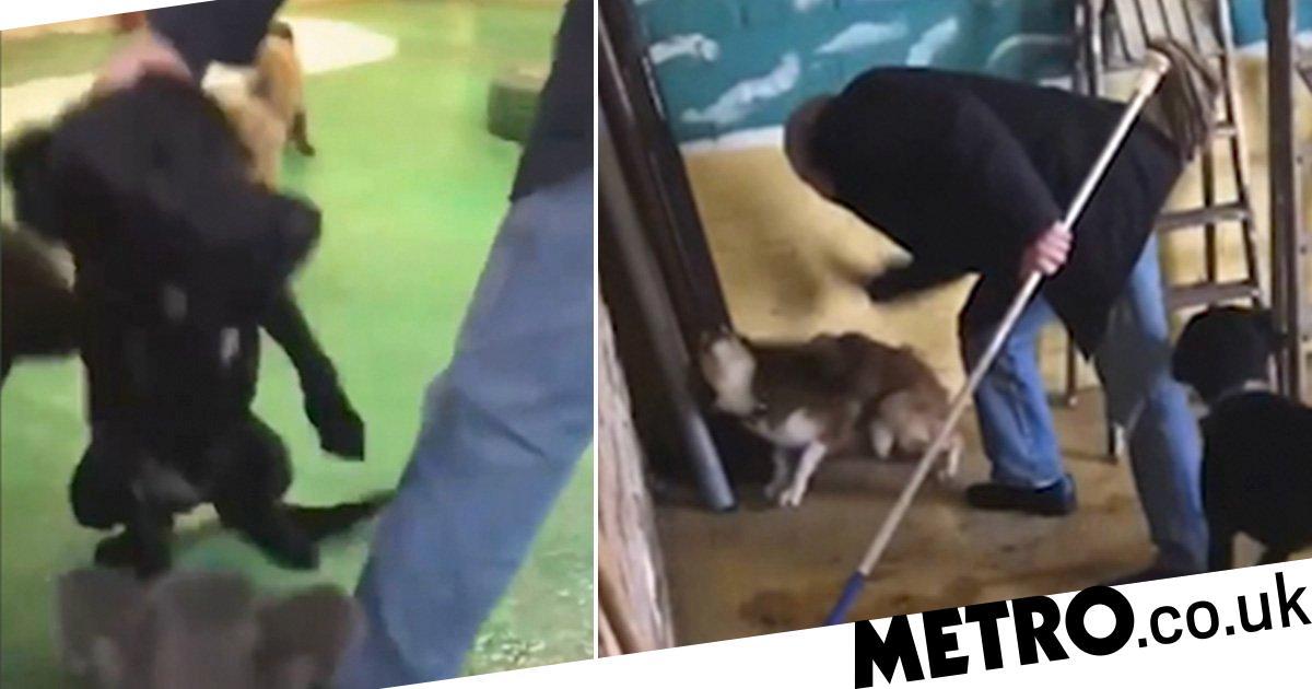 Kangourou A Filme Battre Et Donner Des Coups De Pied Aux Animaux De Compagnie A La Pepiniere Protegez Votre Chien Animaux De Compagnie